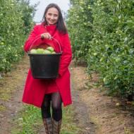 Odmiany polskich jabłek – ściągawka