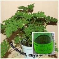 Geranium-Anginka -lekarstwo-nalewka