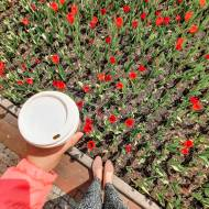 Spring coffee