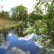 Wiosenna rzeka Grabia w Ldzaniu Talarze woj. łódzkie