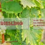 Król Riesling – degustacja