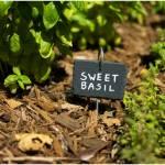 Zioła i przyprawy z własnego zielnika, czyli zioła w ogrodzie